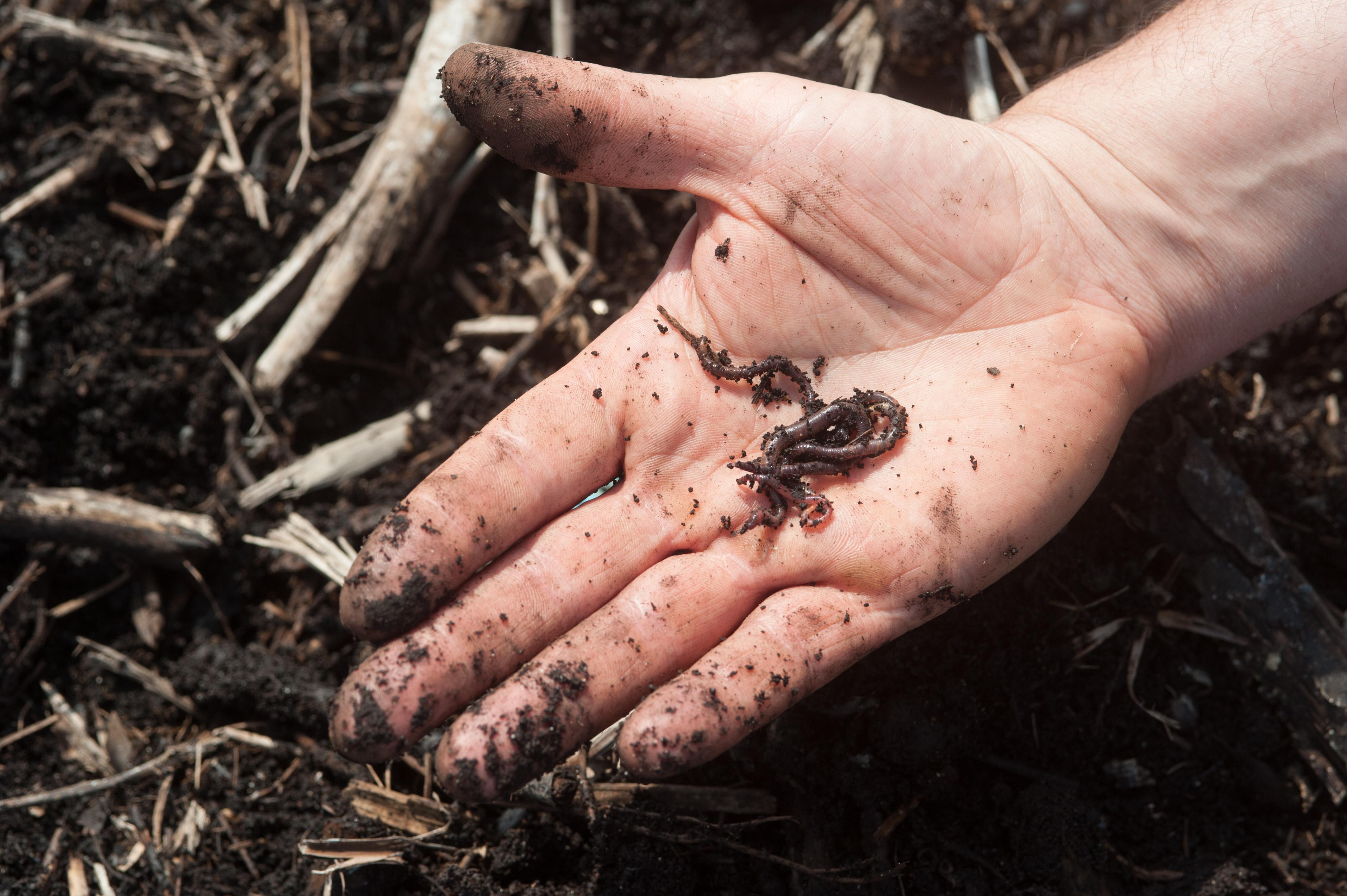 Photo Marcel le ver de terre